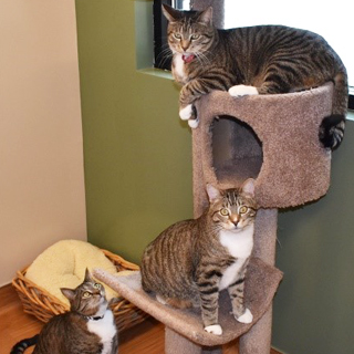 Cat boarding picture